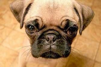 this is little dog/toje málý pes