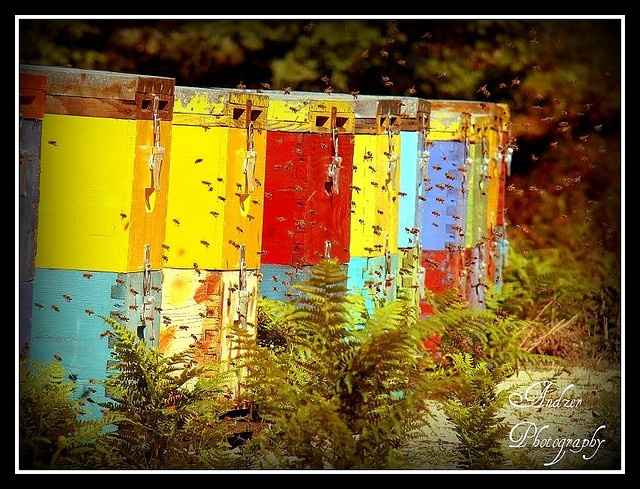 Beehives in Sithonia, Chalkidiki, Greece