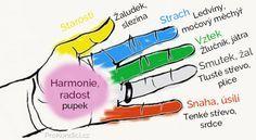 Jin Shin Jyutsu– starobylé japonské léčitelské umění podporující vyváženost emocí stimulací bodů na rukou. Jestliže chcete působit na některý orgán, obemkněte jemu odpovídající prst druhou rukou a držte 3-5 minut. Přitom zhluboka dýchejte.