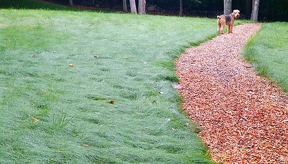 9 best no mow lawn images on pinterest