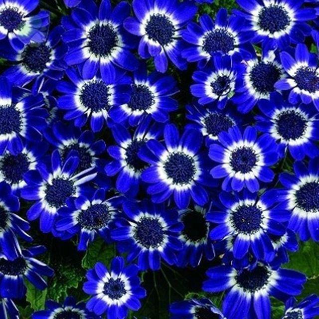 Resultado de imagen para flores exoticas azules nombres