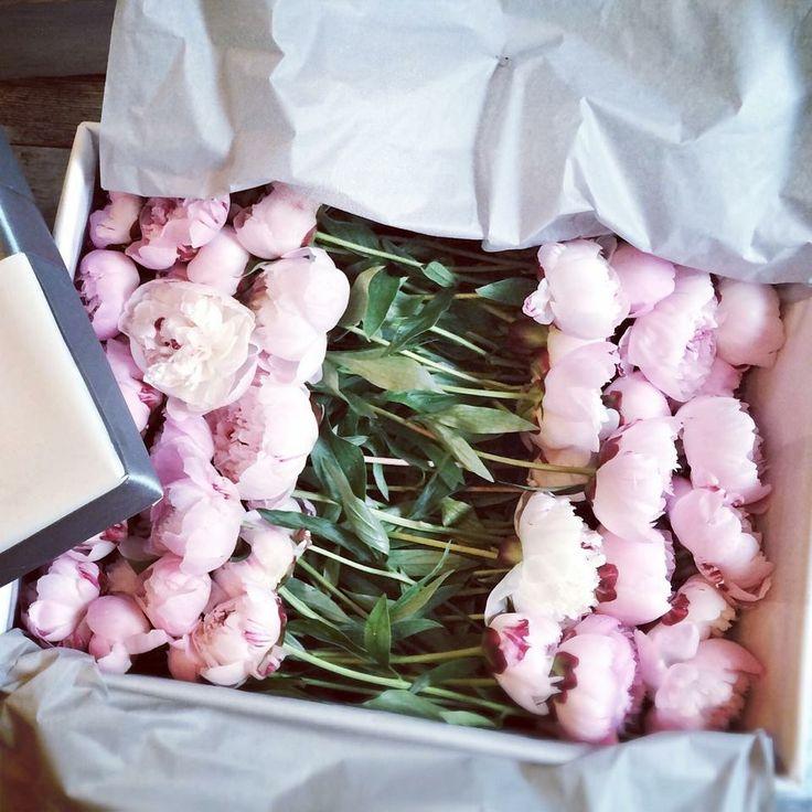 Peonies , Peony  Flowers