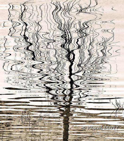 EEE08 - Effets d'Eaux -Le reflet de l'arbre au gré de l'onde de l'eau - Alpes de Haute Provence 04