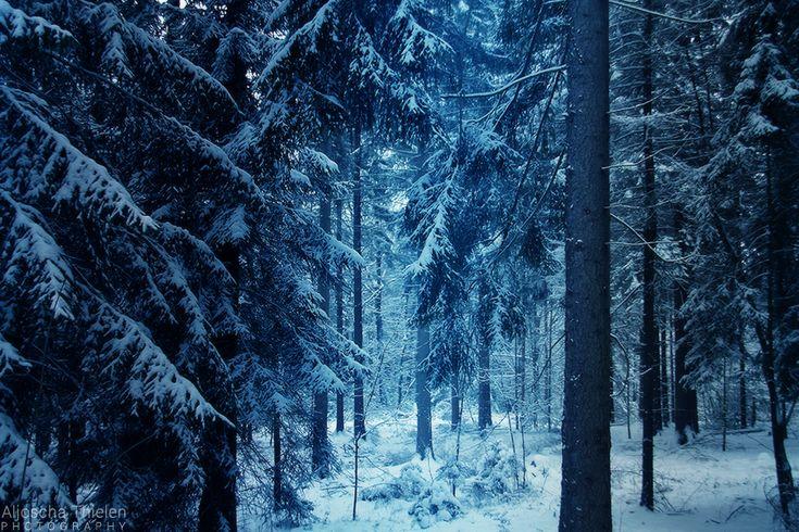 Winter In Narnia Winter Wonderland Narnia Winter Beauty Winter S Tale