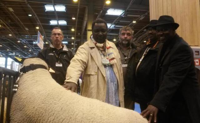 Pascal Pottard, directeur adjoint de l'Esat Atout Brenne (au centre), en compagnie d'une délégation malienne en visite au Salon, mercredi, pour découvrir ses moutons suffolks. - Pascal Pottard, directeur adjoint de l'Esat Atout Brenne (au centre), en compagnie d'une délégation malienne en visite au Salon, mercredi, pour découvrir ses moutons suffolks.