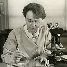 Barbara McClintock won a Nobel prize for her discovery that genes could move in and between chromosomes.