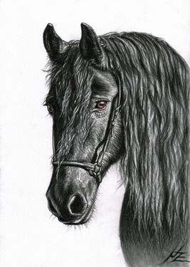 "Saatchi Online Artist Nicole Zeug; Drawing, ""Black Pearl - Friesian Horse"""