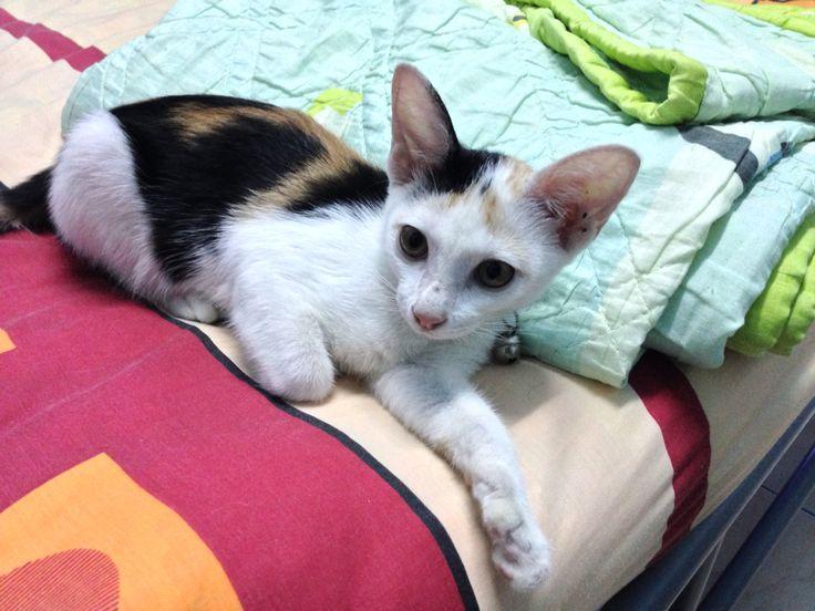 เอ นขว ญ แมว ล กแมว Earnkwan Cat Kitten แมว ล กแมว น าร ก