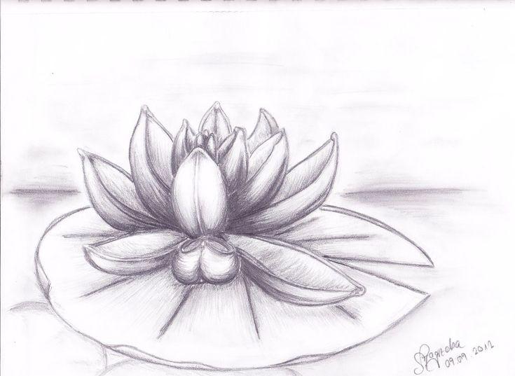 картинки как нарисовать лотос тюльпанов