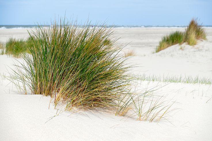 Duinen / dunes Renesse. Fuji X-T1