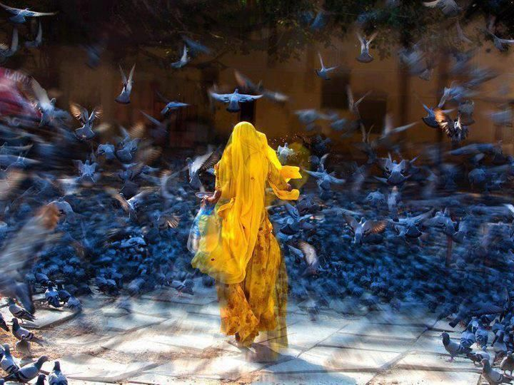 stunning colors and movementPhotos, Quote, Colors, Art, Beautiful, India, Izidor Gasperlin, Birds, Photography