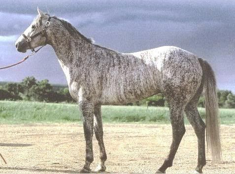 Grey brindle, I've seen brindle cows and brindle dogs, but never a brindle horse.