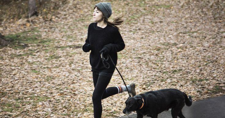 LE BRISTOL DRYLAND : POUR GARDER LA FORME EN BONNE COMPAGNIE! #sport #sports #entrainement #chien #course #jogging