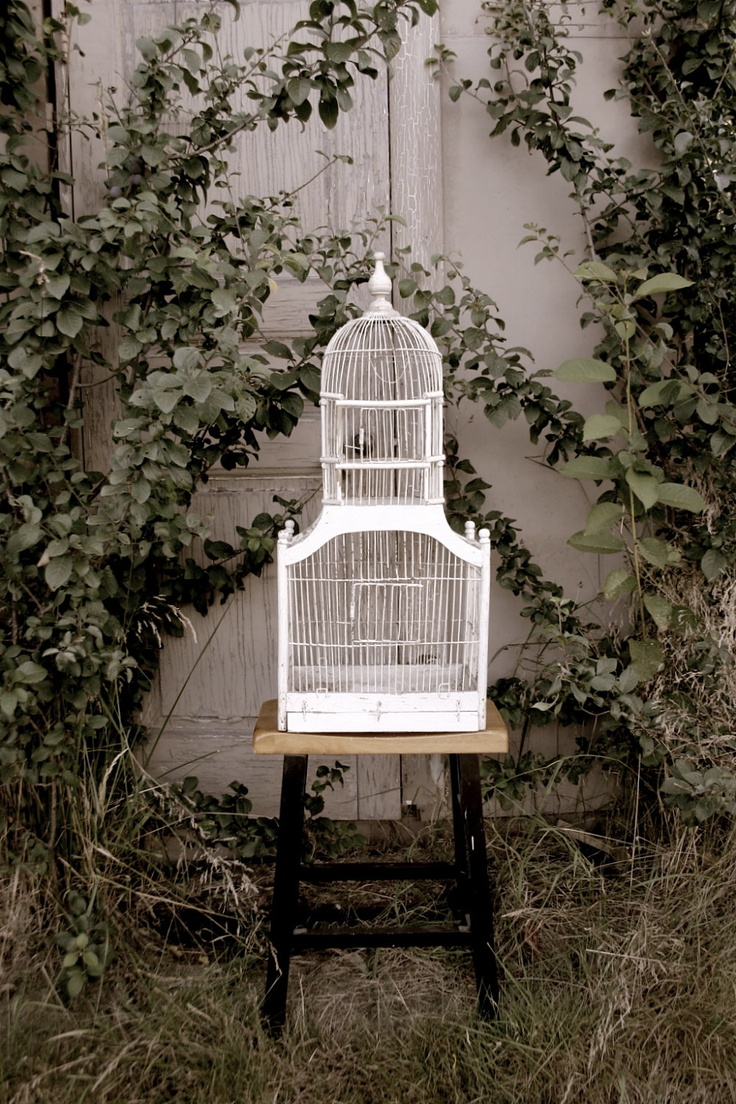 Old Bird Cage -