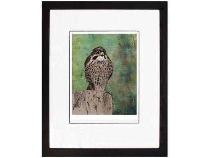 New Zealand Falcon Archival Print