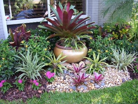 Some bromeliads in landscaping | container gardening ...