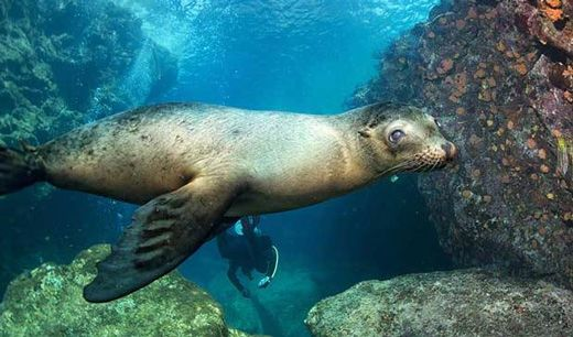 Have an incredible wildlife viewing and photographic opportunities & fantastic on board service by booking a trip to Galapagos Adventure - Nemo II Itinerary B from £3,099 using Exodus Travels.