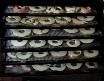 20 Gala Apples filled 6 Trays - 140 F - 6 hours   Cored, sliced, soaked in a solution of 1.5 T Sodium Bisulfite and 1 gallon of water for 5 min.  I used Excalibur's Apple Peeler, cast iron with stainless steel loop blades, worked great.   11-14-15