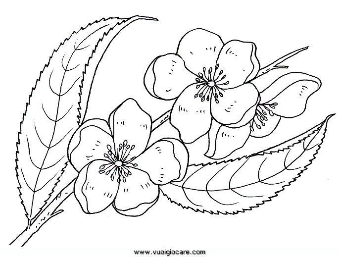 Coloring Pages Of Le Blossoms : Fiori di pesco da colorare utilizato in uovo pasqua