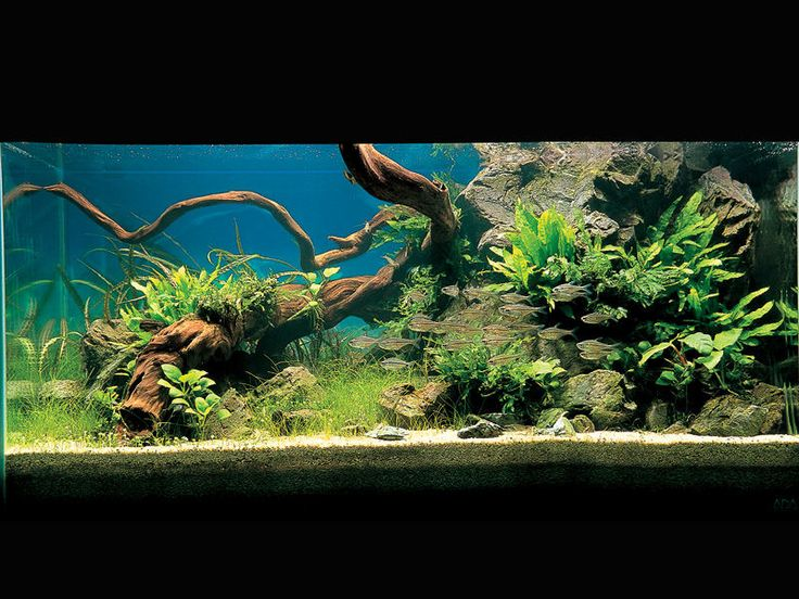 A Natural Fish Tank This Would Be Great With Low