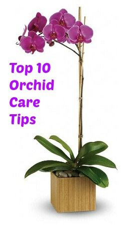Video: Top 10 Orchids Care Tips