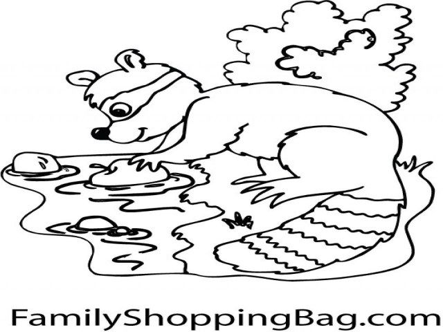 25 Inspiration Picture Of Raccoon Coloring Page Birijus Com Coloring Pages Free Coloring Pages Free Coloring