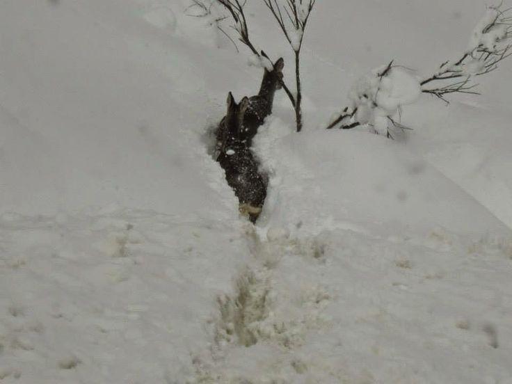 ¡Qué bonita la nieve!!!!!