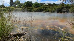 Kuirau Park #Rotorua