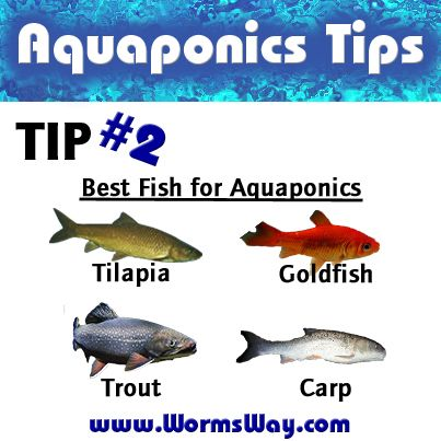 87 best aquaponics images on pinterest for Best fish for aquaponics