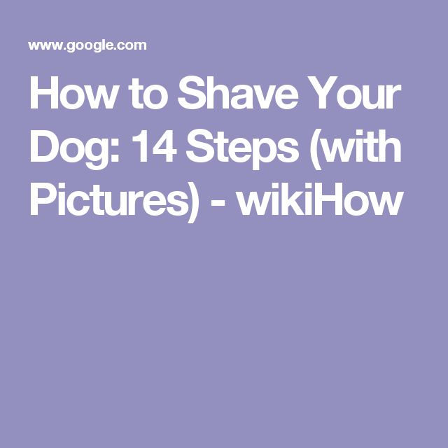 How to Shave Your Dog: 14 Steps (with Pictures) - wikiHow