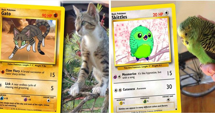 Show everyone that you caught the rarest Pokemon of them all by adding your beloved pet to your collection! This fully customizable Trading Card can even include your pet's preferences such as the Pokemon type, description and attacks.
