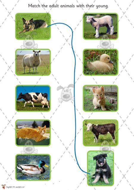 Teacher's Pet - Farm Animals and their Babies (cut & stick) - Premium Printable Classroom Activities and Games - EYFS, KS1, KS2, farming, ba...