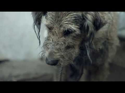 Watch this! Pedigree 2013 Feeding Brighter Futures Ad Bad Dog, Good Dog - YouTube