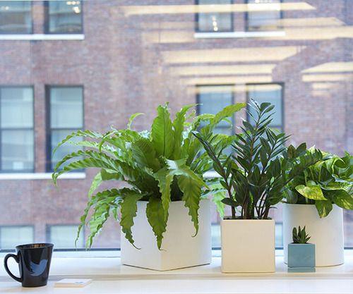 1000 ideas about office plants on pinterest best office plants interior plants and offices - The best office plants ...