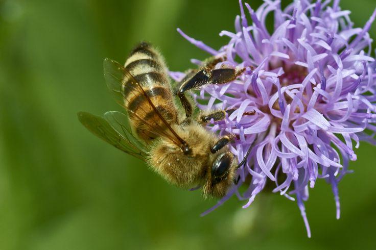 bee 11 - bee