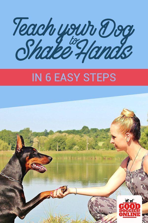 6 Creative Ways On How To Teach A Dog To Shake Hands Dog
