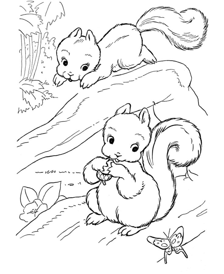 squirrel drawing and colouring GoogleSuche