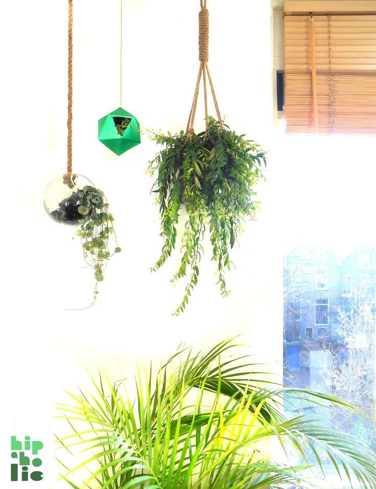 Hanging plants by Hipaholic #urbanjunglebloggers