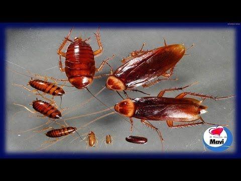M s de 25 ideas incre bles sobre como eliminar moscas en for Como eliminar cucarachas del desague