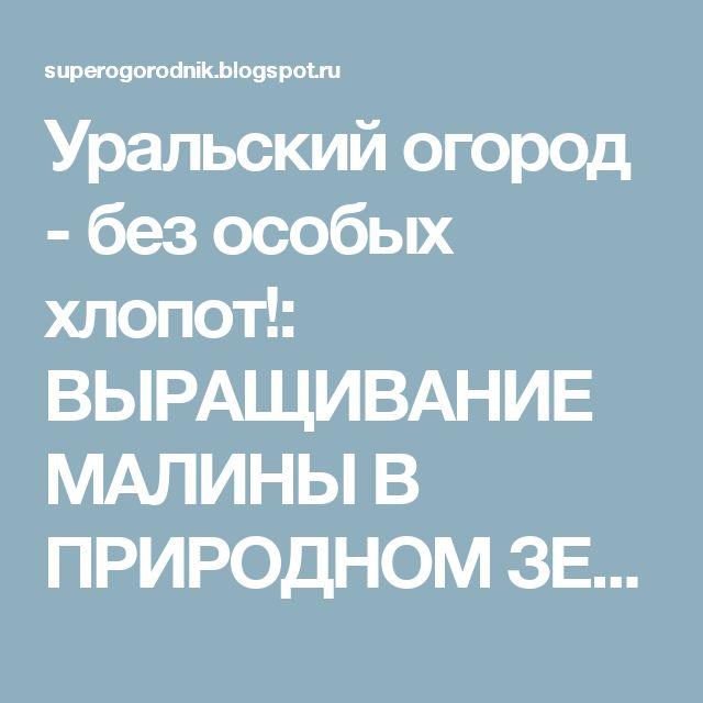 Уральский огород - без особых хлопот!: ВЫРАЩИВАНИЕ МАЛИНЫ В ПРИРОДНОМ ЗЕМЛЕДЕЛИИ!