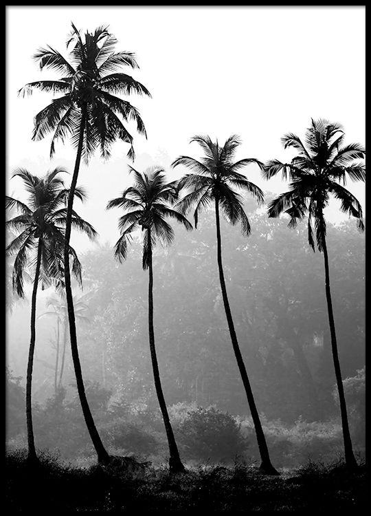 Palm trees, plakat i gruppen Plakater / Størrelser / 40x50cm hos Desenio AB (8379)