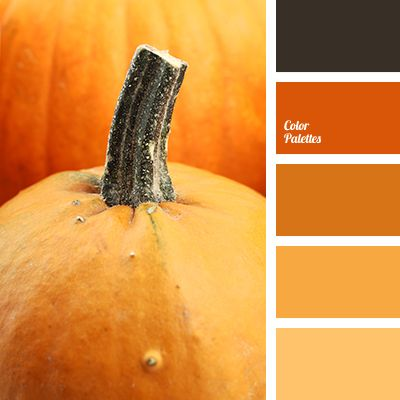 """Main autumn colours are combined in this palette: pumpkin,apricot. These """"tasty"""" colours emphasise the gloomy darkgray (charcoal), that reminds of autumn."""
