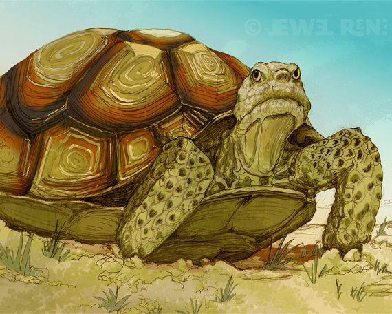 tortoise drawing for pinterest - photo #4