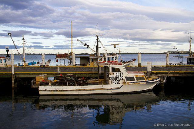 Tauranga harbour | © Elyse Childs Photography