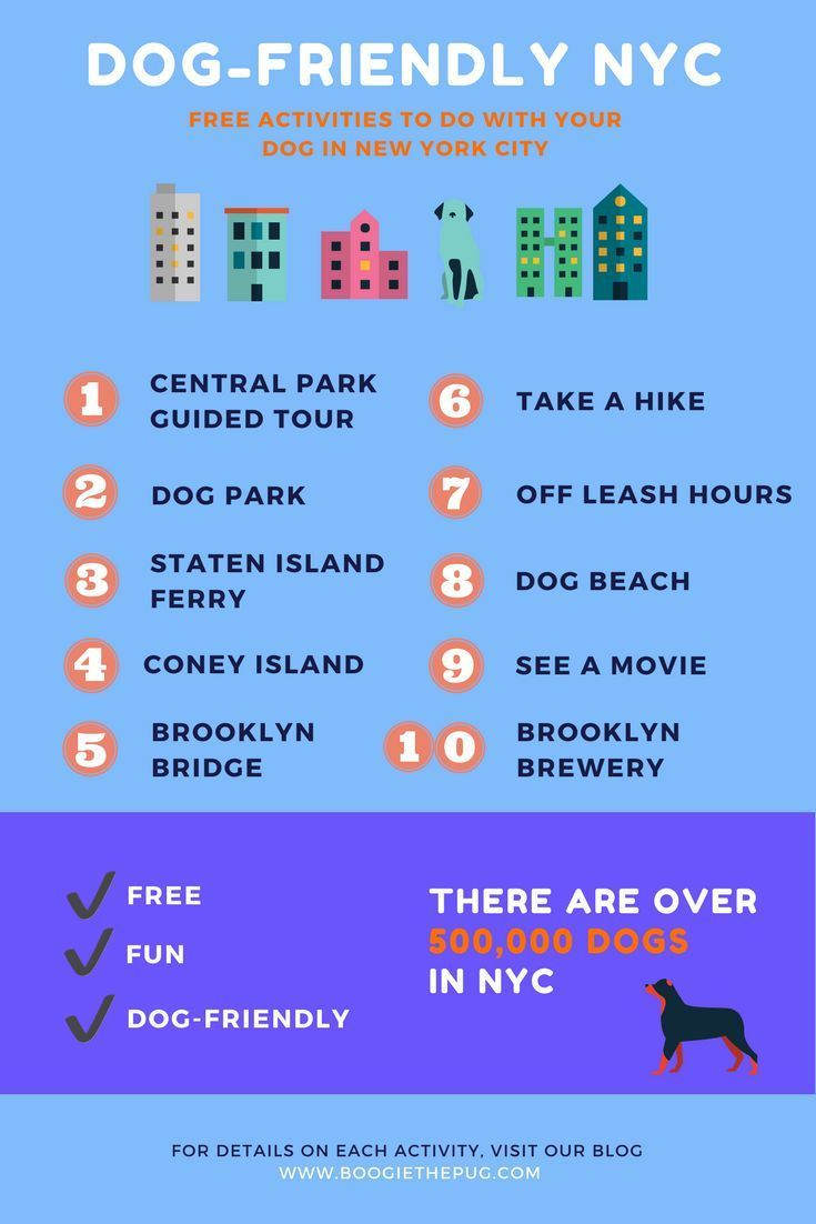 10 Free Things To Do In Nyc With Your Dog Free Things To Do Nyc