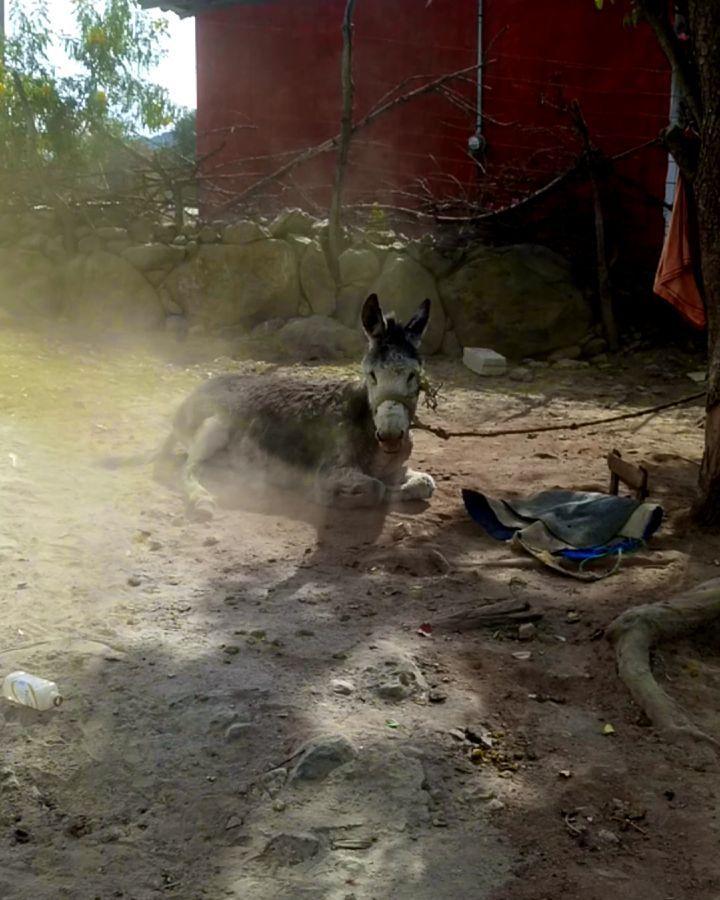 Este año (que aún no se acaba) me ha dejado momentos y personas increíbles  #veterinarymedicine #veterinary #veterinarian #veterinarianlife #donkey #unam #fmvz #méxico