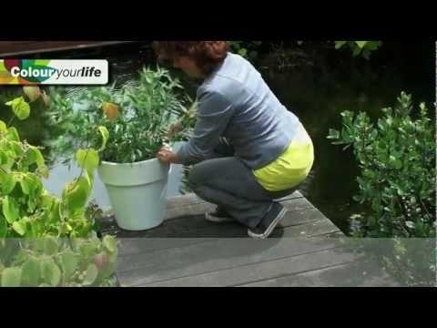 17 beste idee n over blauwe tuin op pinterest riddersporen paarse tuin en witte tuinen - Kleuren die zich vermengen met de blauwe ...