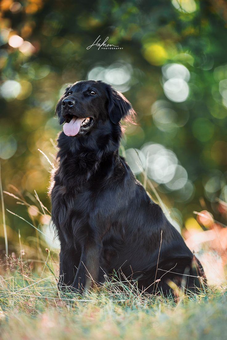 Hunde Und Pferdefotografie Kreativ Und Zeitlos Hafner