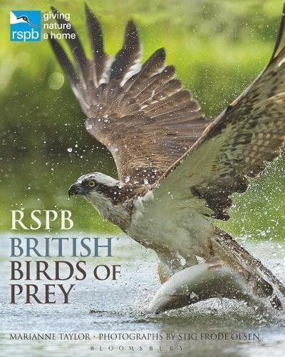 From 8.01:Rspb British Birds Of Prey   Shopods.com