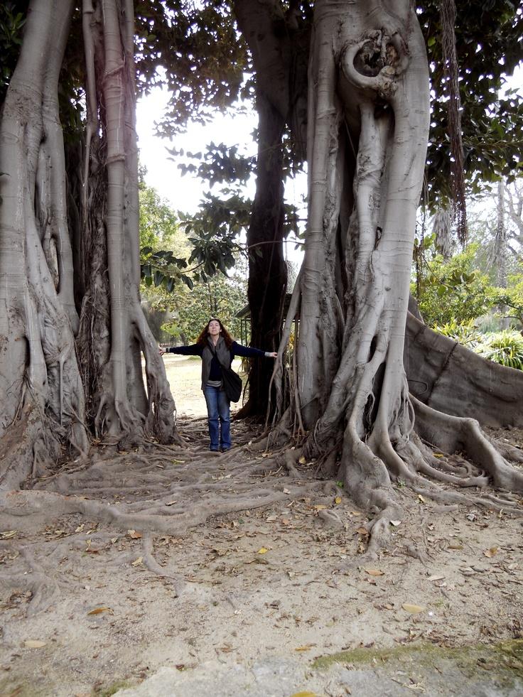 orto botanico io sotto un gigantesco ficus.....Palermo.
